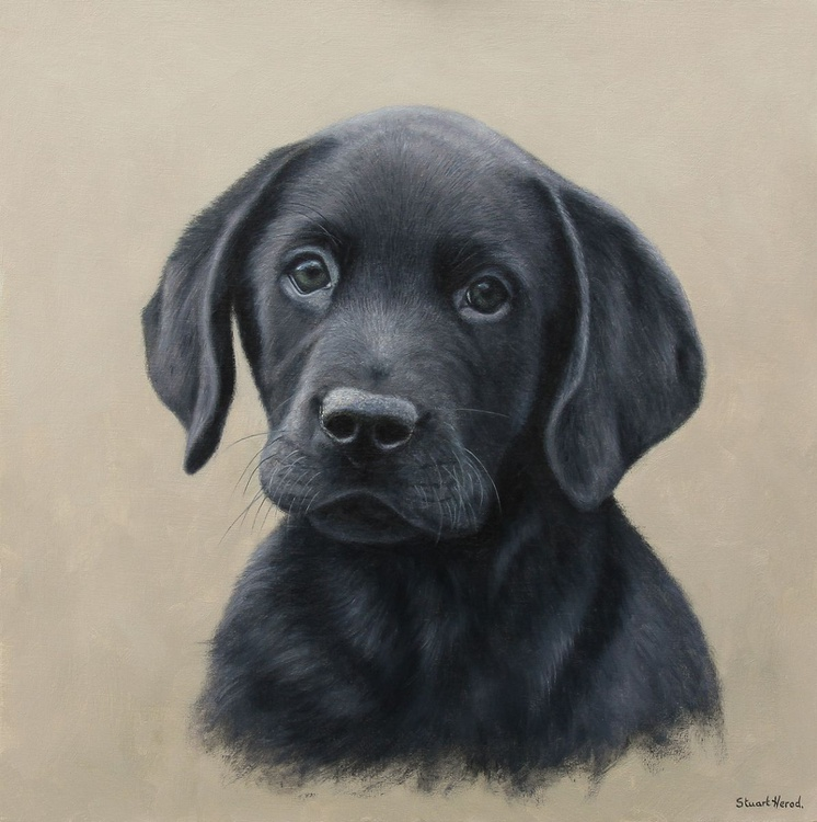 Labrador Puppy. - Image 0