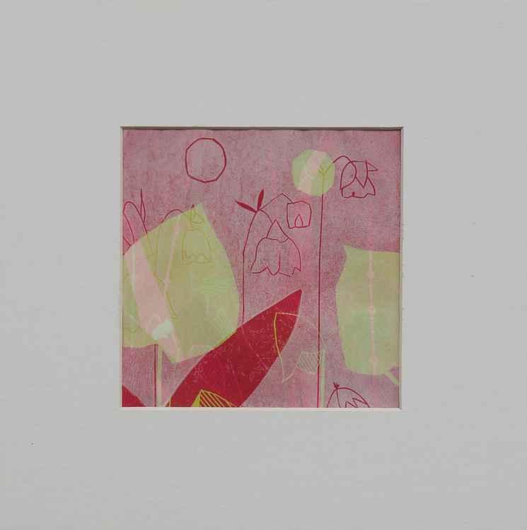 Pink Sweet Iris -