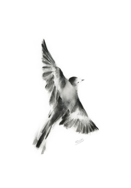 Graphite and ink wagtail - Image 0