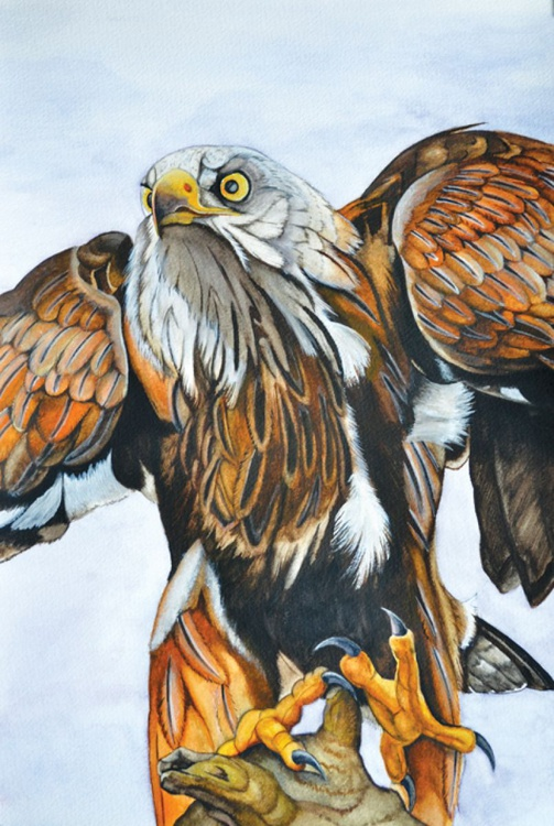 """Watercolour Painting. """"Red Kite"""" - Image 0"""
