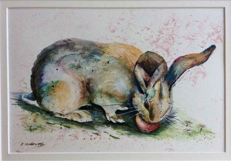 Rabbit eating an apple -