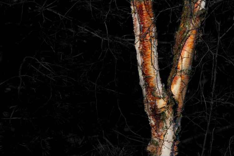 spooky tree 4 -