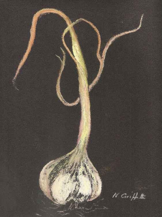 Garlic Head -