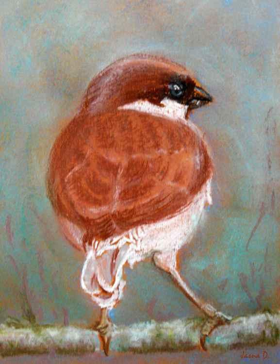 Sparrow -