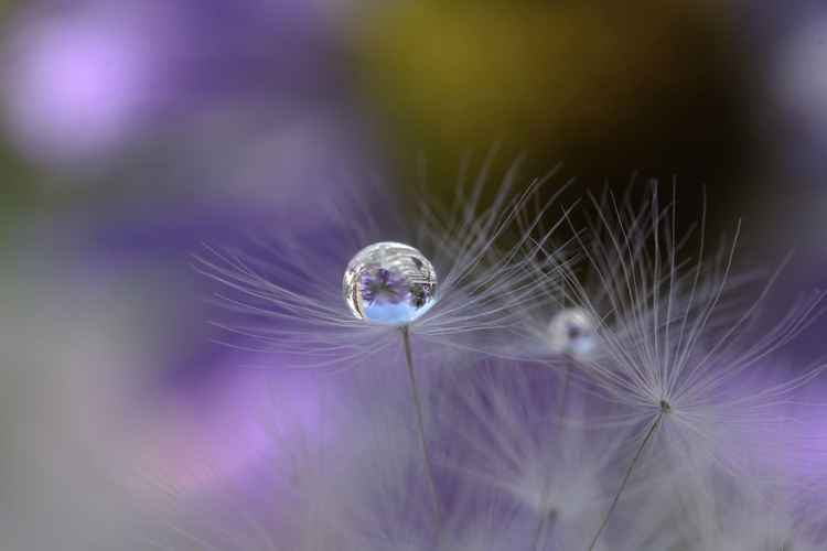 Purple drop -