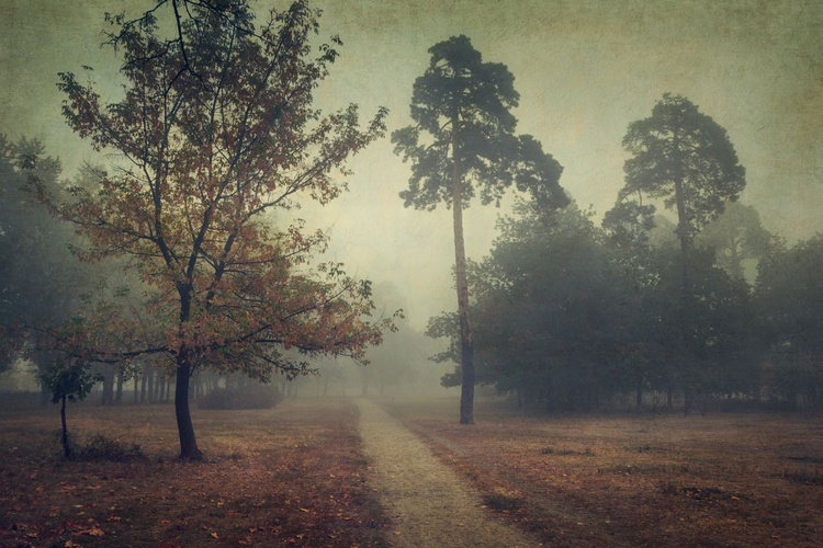 Road to the fog. - Image 0