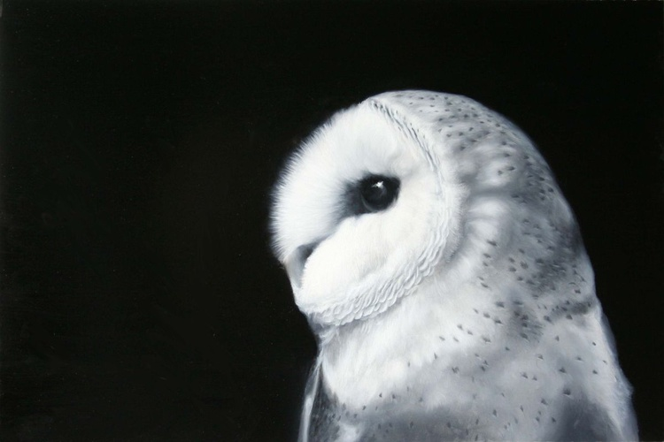 Barn Owl - DSWF Wildlife Artist of the Year finalist. - Image 0