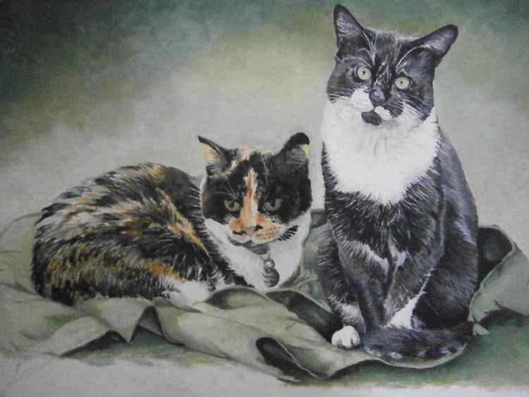 cat portrait -