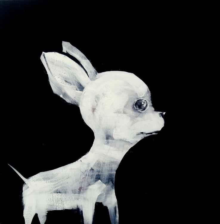 Chihuahua -