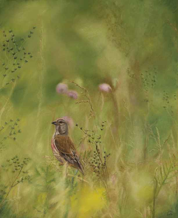 "Original pastel drawing ""Linnet"" -"