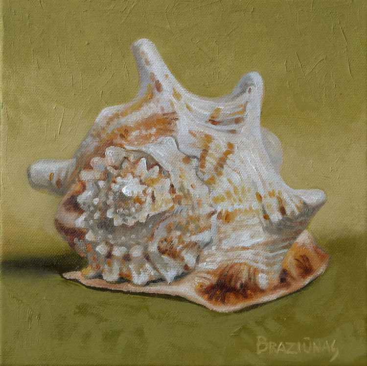 Shell, miniature -