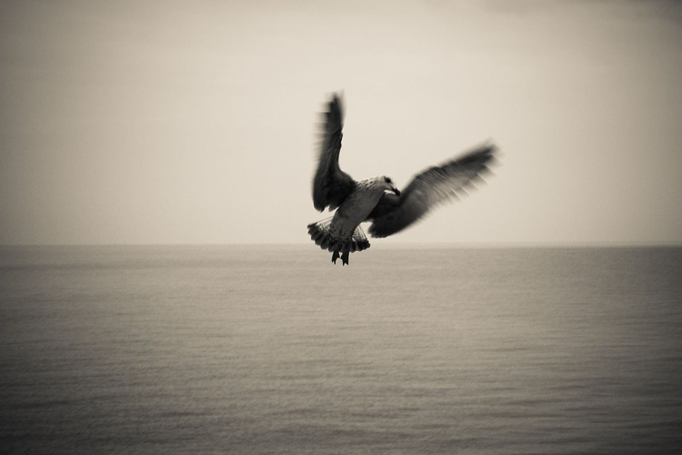 The Seagull. - Image 0