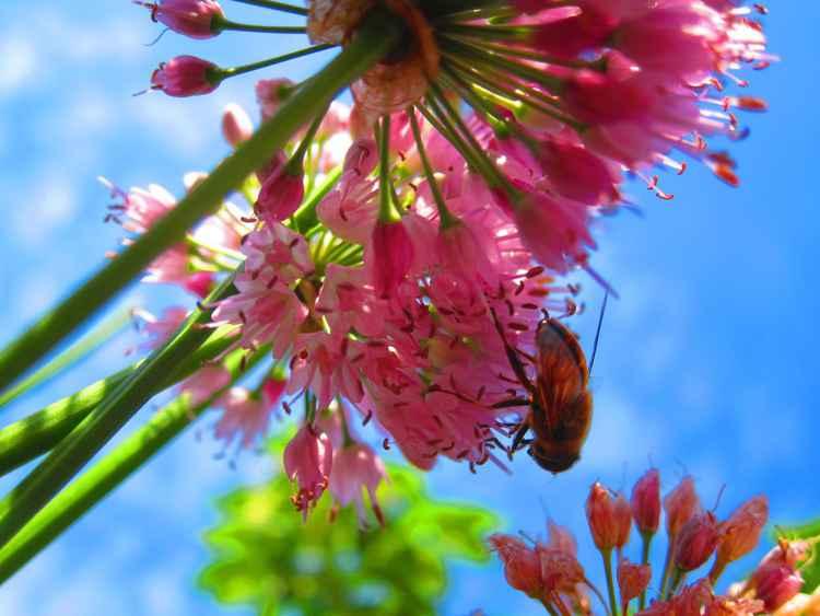 Bee -