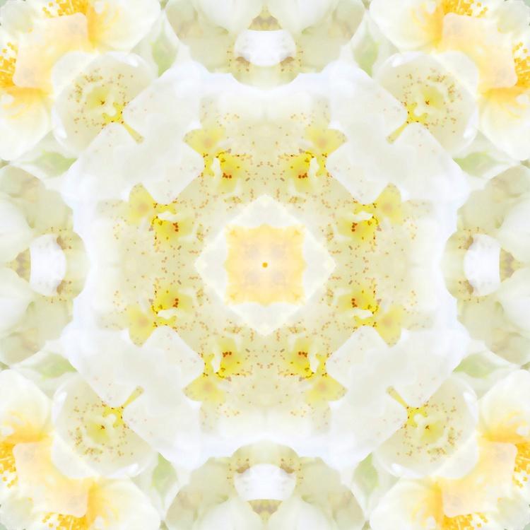 Blossom Mandala I - Image 0