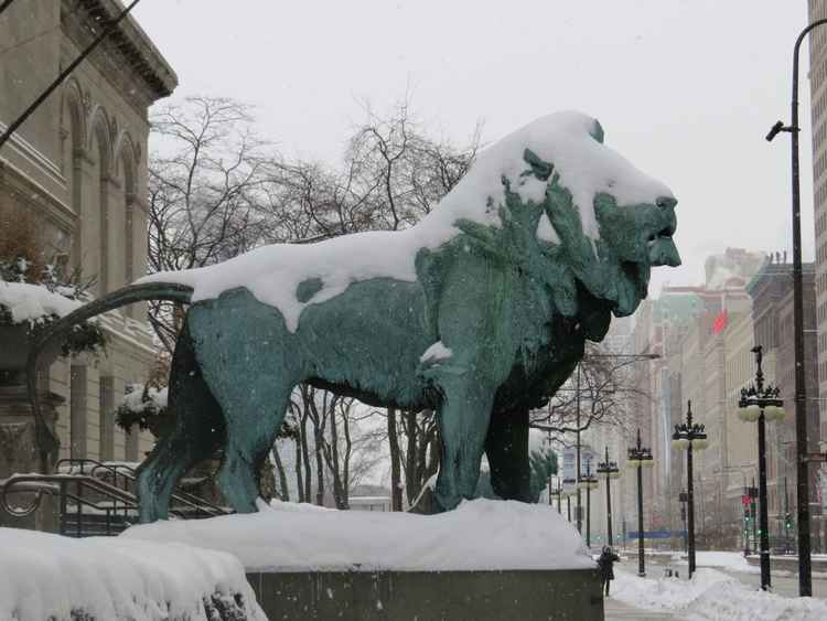 Lion in Snow -
