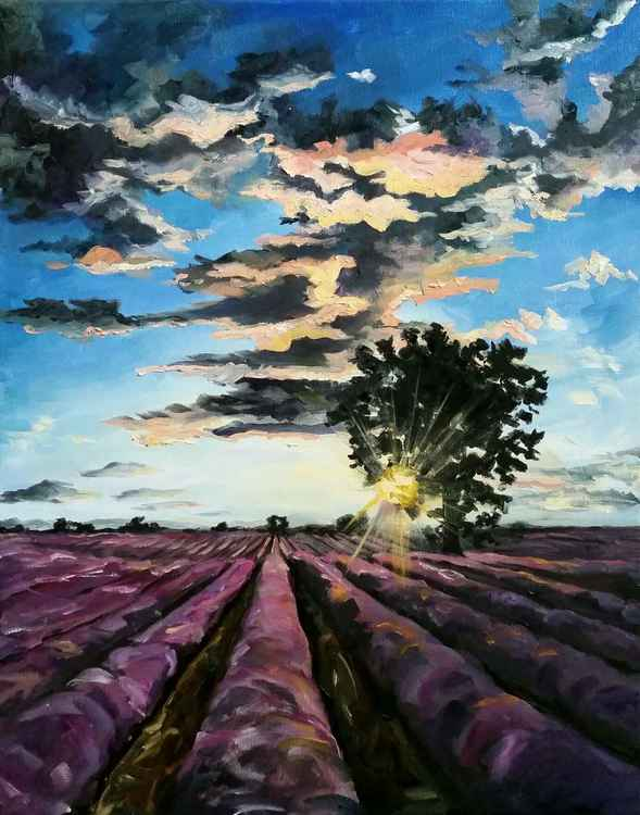 Sunrise Over Lavender -