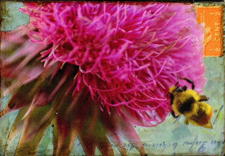 Thistle, Mixed Media Miniature (ACEO) - Image 0