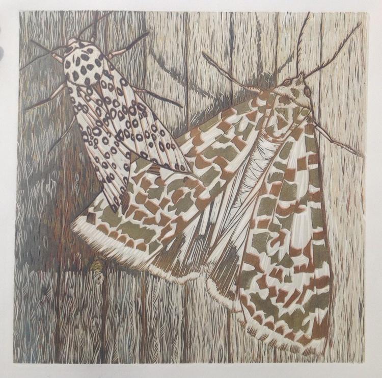 Mammoth Moths - Image 0