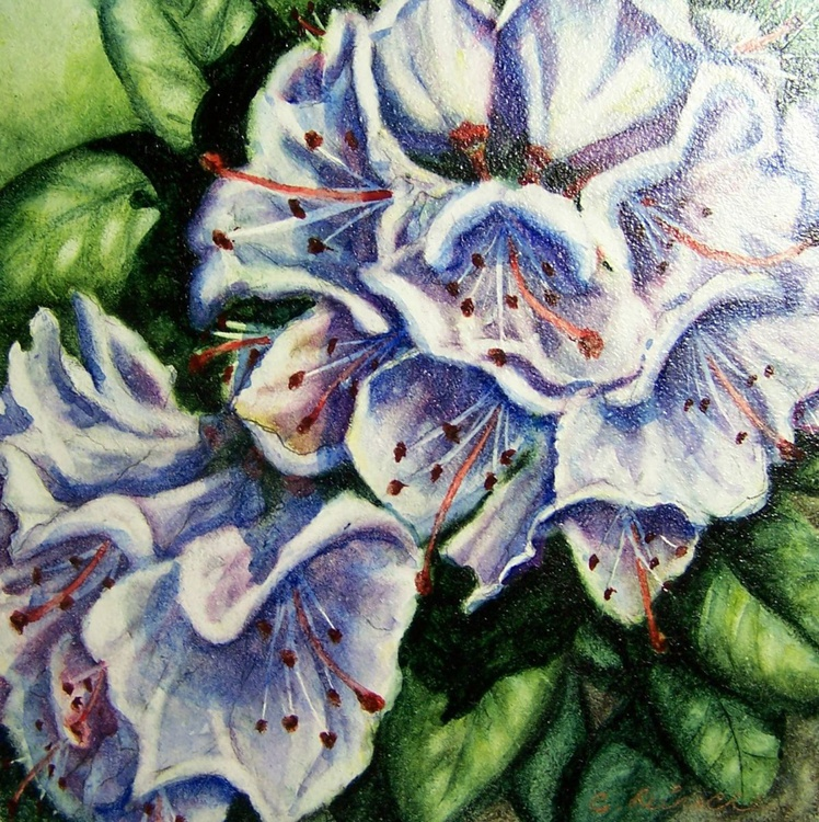 Rhody Blooms - Image 0