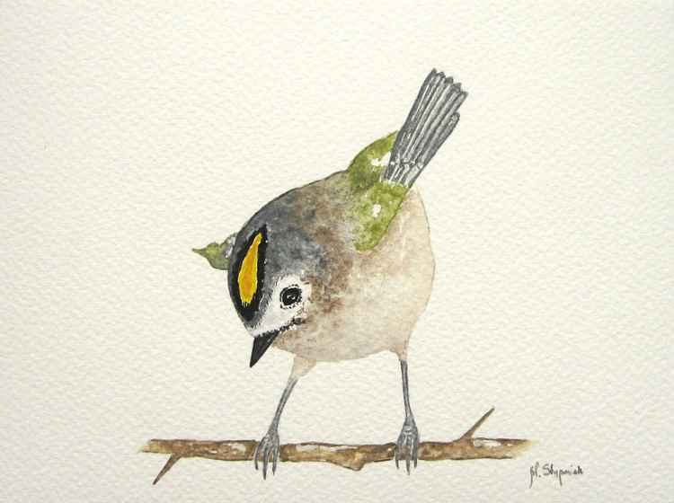 The goldcrest (Regulus regulus) -