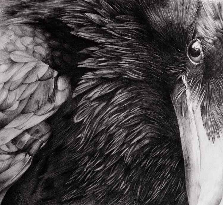 Raven pencil drawing