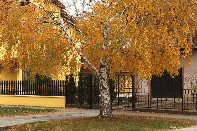 Golden autumn - Image 0