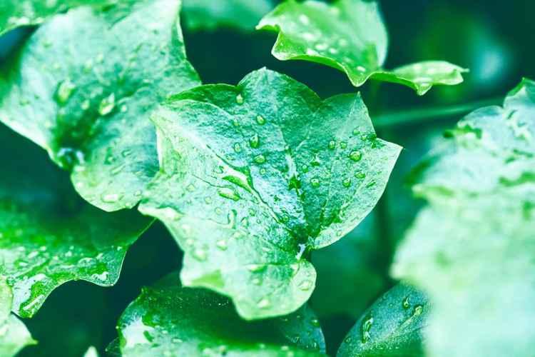 Wet Green -