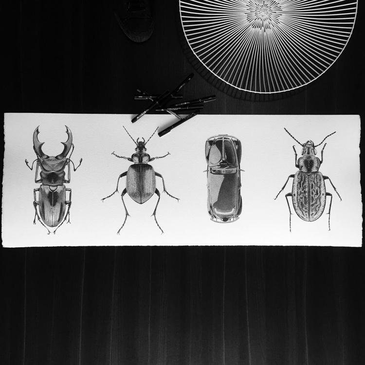 Beetles cousins - Image 0