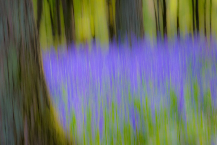 Bluebell Wood  - Small (A4) Edition - Limited Edition Print - Image 0