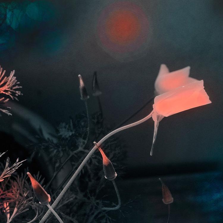 Pink Still Life - Monoprint - Image 0