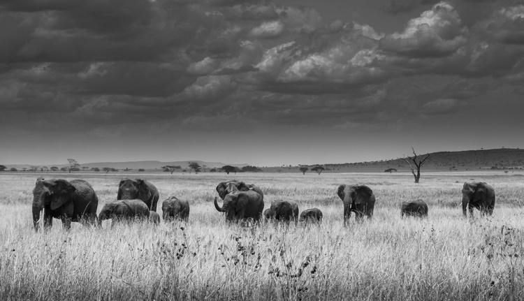 THE ELEPHANT FAMILY 2/20 - Image 0