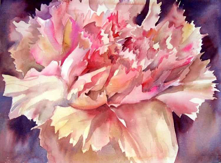 Carnations II -