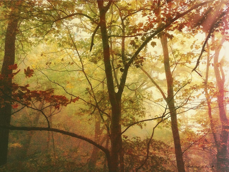 EARLY MORNING MIST - Image 0