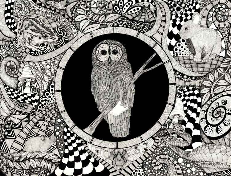 Night Garden Owl -