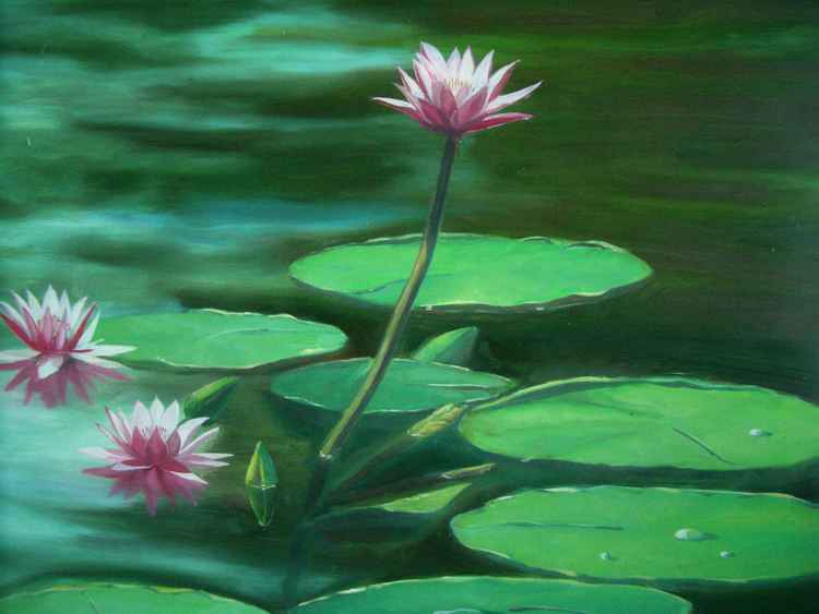 Lotus in the pond -