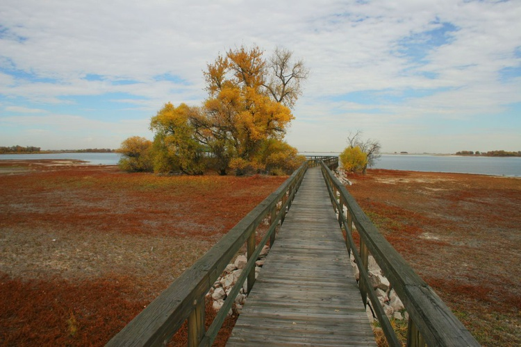 Autumn Boardwalk - Image 0
