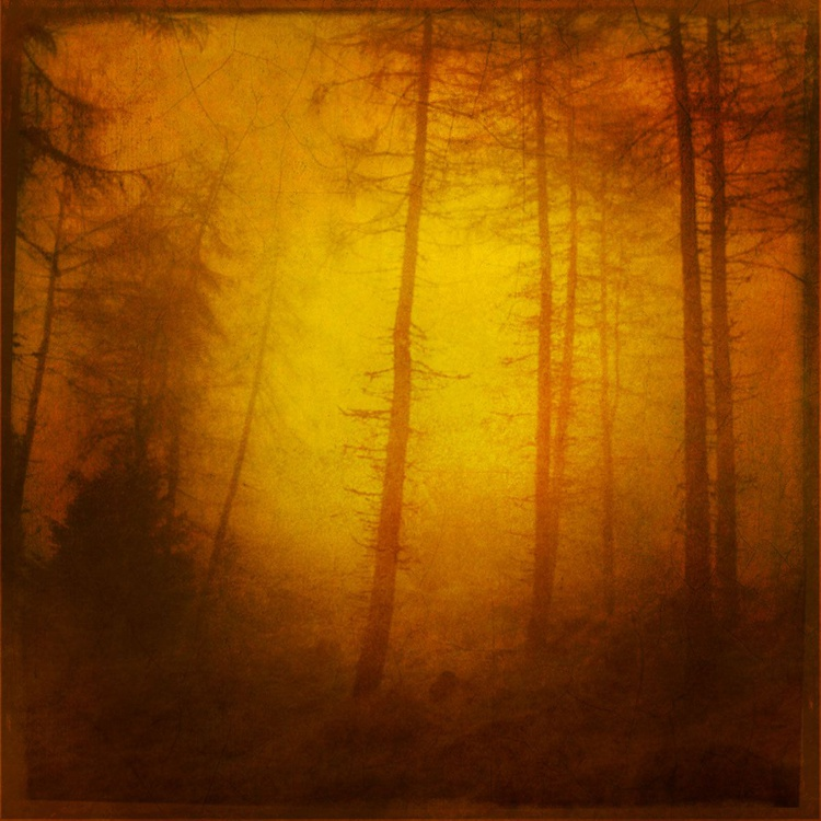 Into the Forest - Image 0