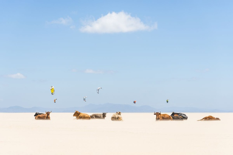 COWS AND KITES - Image 0