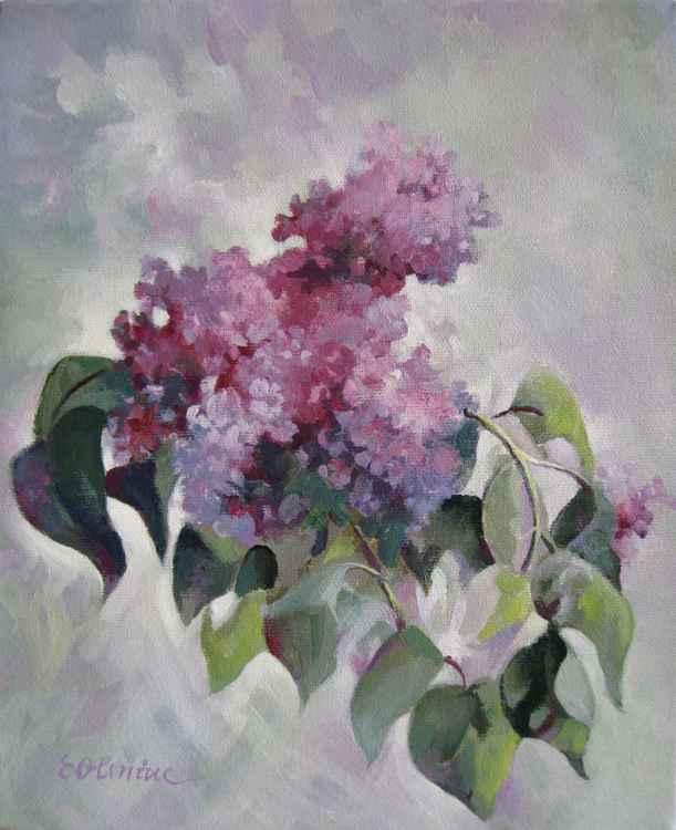 Lilac -