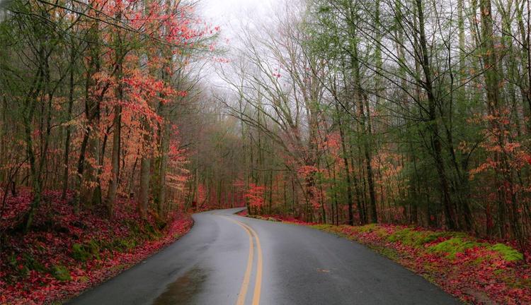 """Rainy Autumn Road"" - Image 0"
