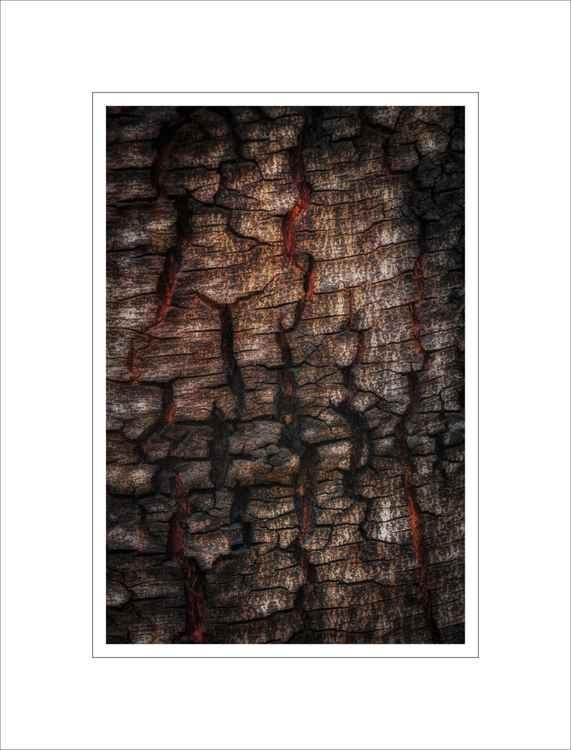 Bark Study 32 -