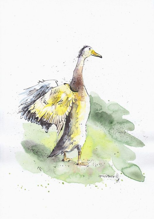 Duck in Golden sunlight - Daily Bird #08 - Image 0