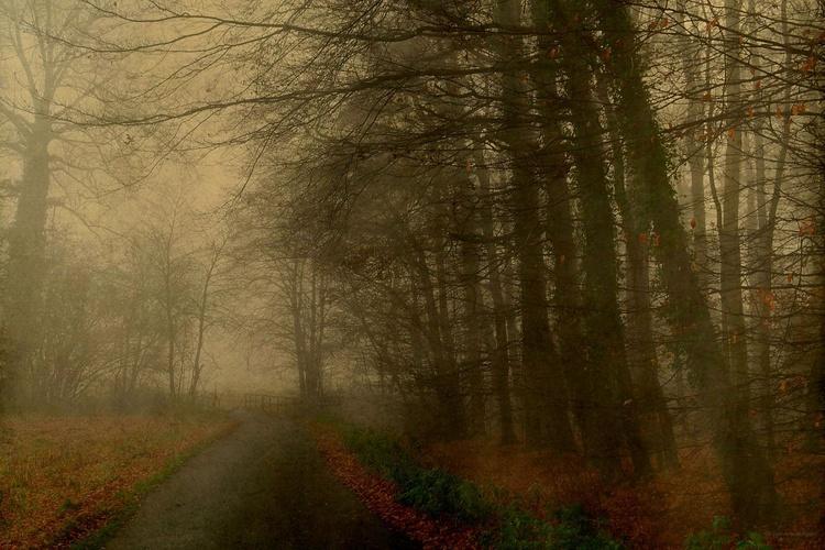 Autumn Melancholy - Image 0