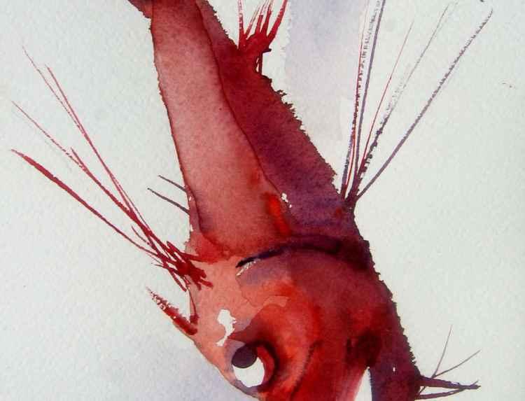 fish (Carmin violet)