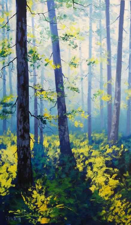 Forest Sunlight -