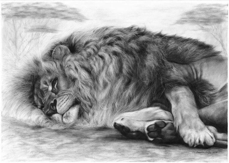 Resting Lion - Image 0