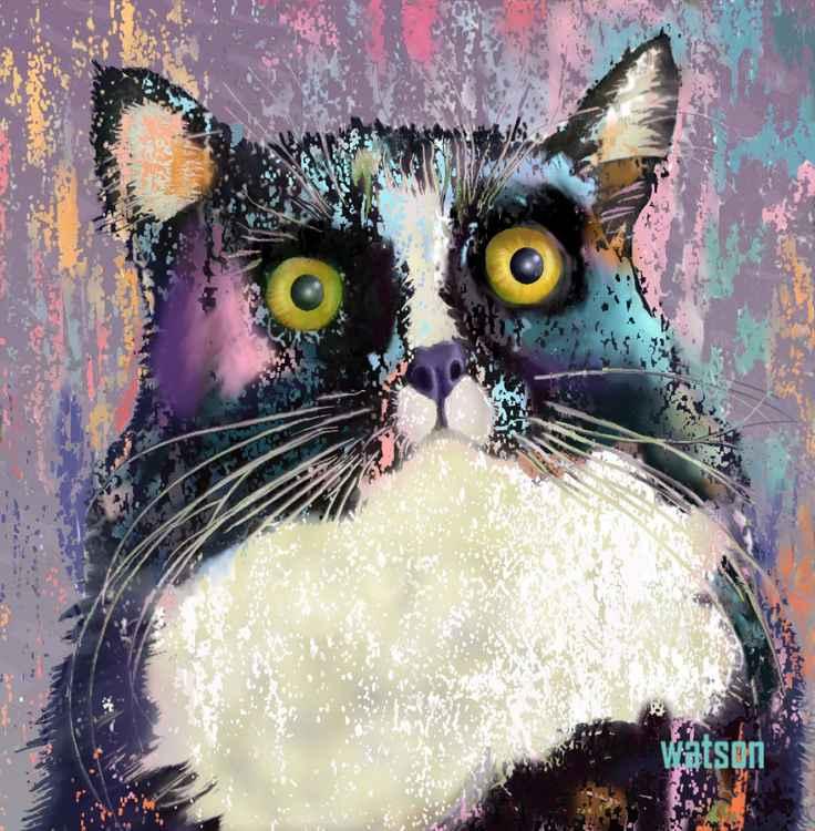 Big Eyed Tuxedo Cat