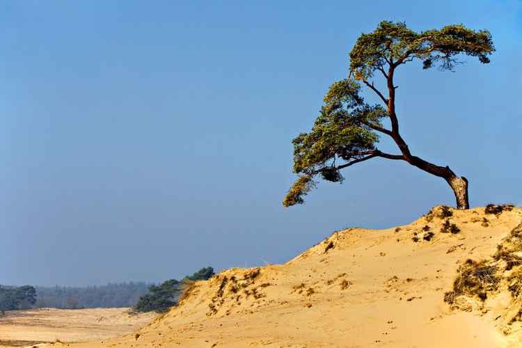 Sand-drift -