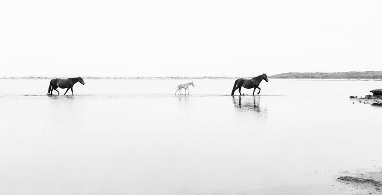 WALKING ON WATER. - Image 0