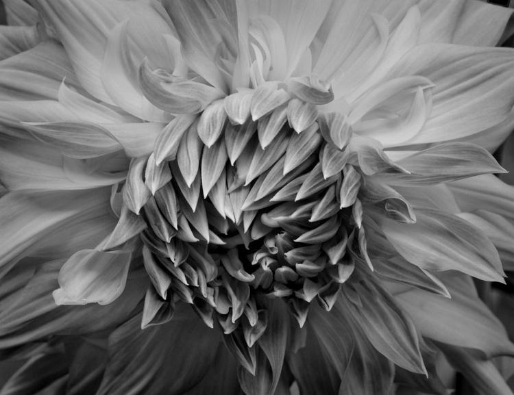 Floral Ecstasy #1 - Image 0